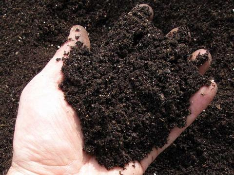 mani con compost
